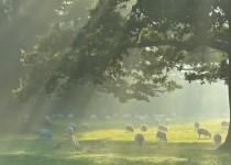 Corsham Park